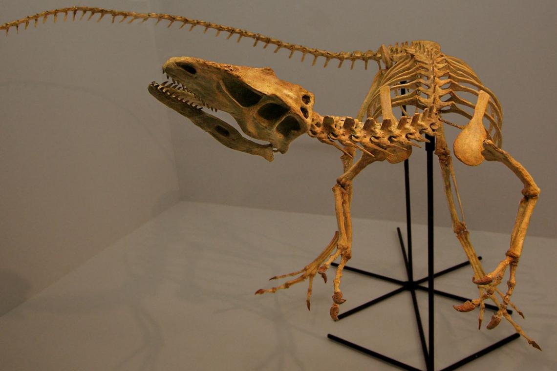 Santanaraptor placidus: o primeiro fóssil a se encontrar tecidos moles (pelos, músculos e vasos sanguíneos).