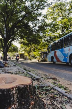 Árvore foi retirada na avenida Duque de Caxias