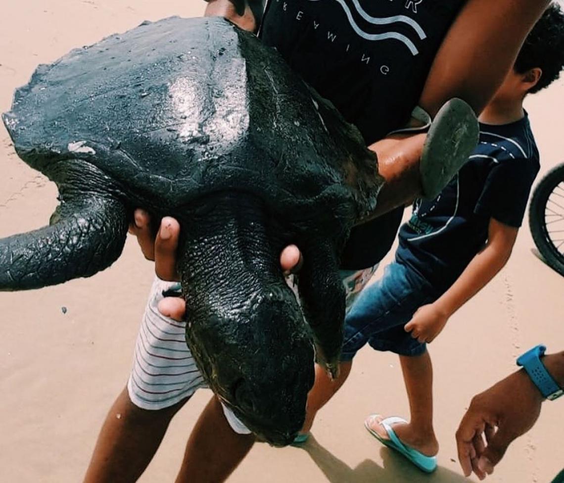 TARTARUGA coberta de óleo  encontrada no Titanzinho, em Fortaleza