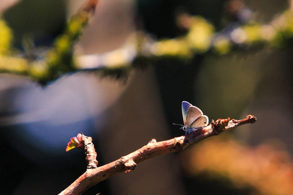 Fauna e flora da serra no Maciço de Baturité. (Foto: Aurélio Alves/O POVO)