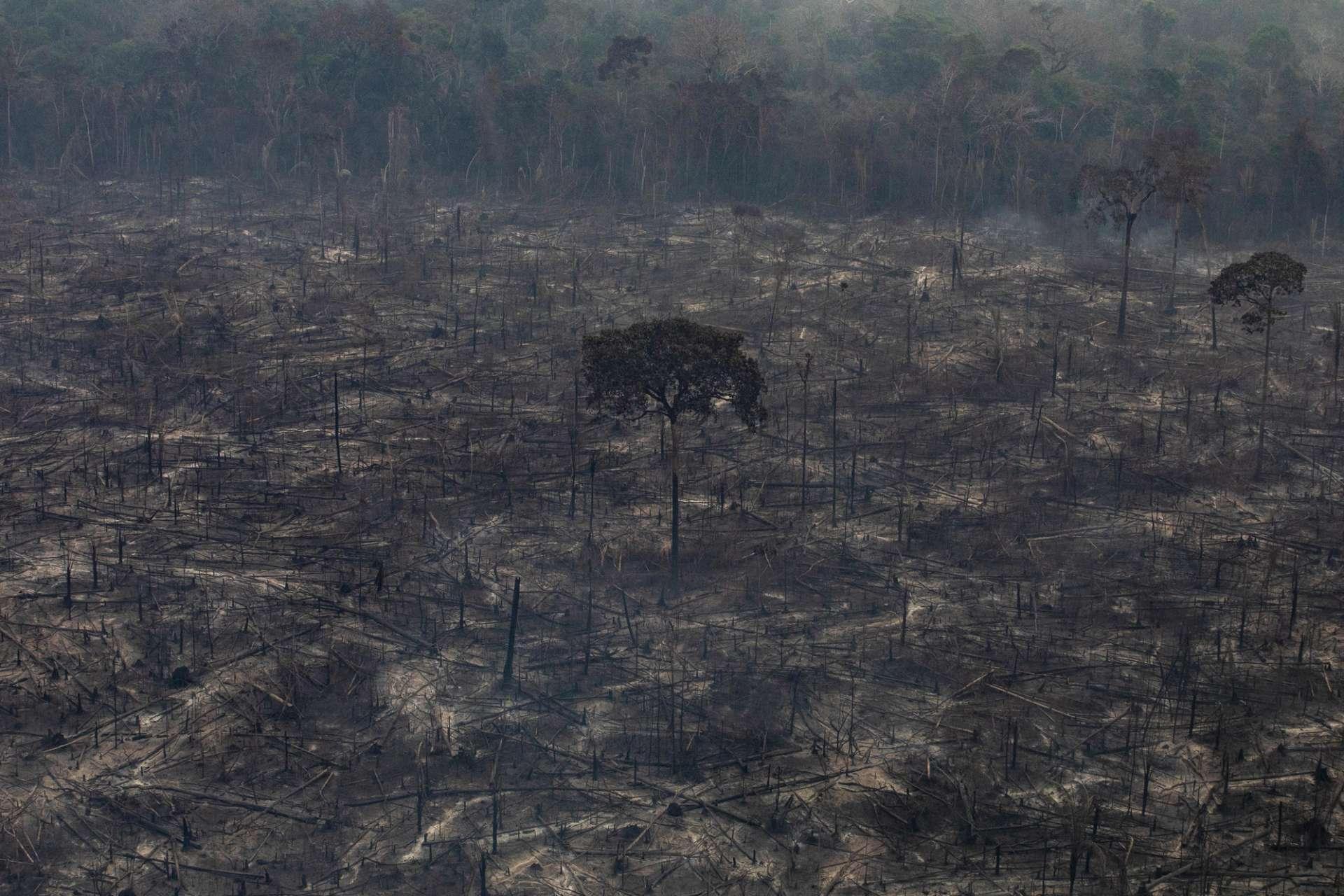 Área devastada por queimada na Amazônia, em agosto de 2019