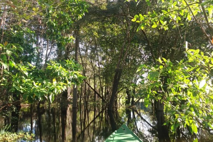 Área de floresta inundada na região do rio Juma, no Amazonas
