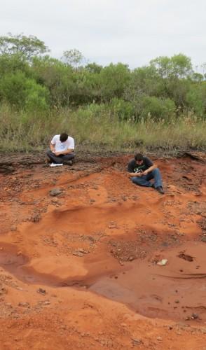 Elessaurus dá pistas sobre a biodiversidade fóssil na América do Sul