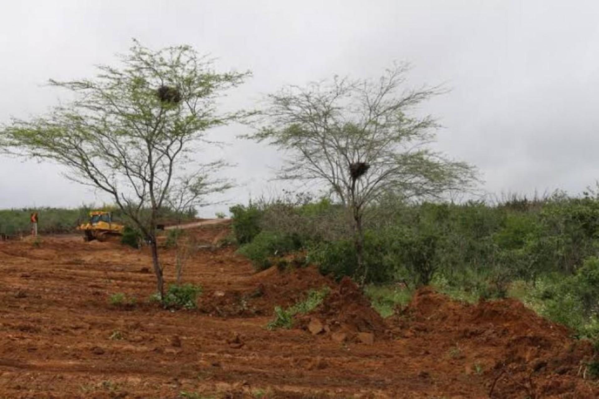 Desmatamento e descontrole