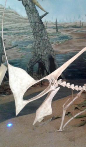 Ela pesquisava a força da mordida dos pterossauros do Cariri, no mesmo laboratório de Arianny Storari.