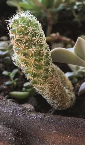 Então vambora! Umas plantinhas ótimas para iniciantes são os cactos e suculentas, que não vão pedir muita rega