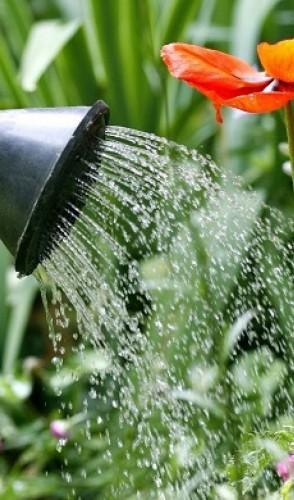 A dica é começar pelas plantas mais fáceis de cuidar, como as que não precisam de muita água ou poda