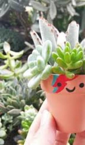 E aí, consegui te convencer a começar com pelo menos uma plantinha em casa?