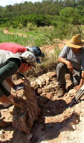 O Kurupi viveu aproximadamente 70 milhões de anos atrás, onde hoje se localiza Minas Gerais, Goiás e São Paulo.