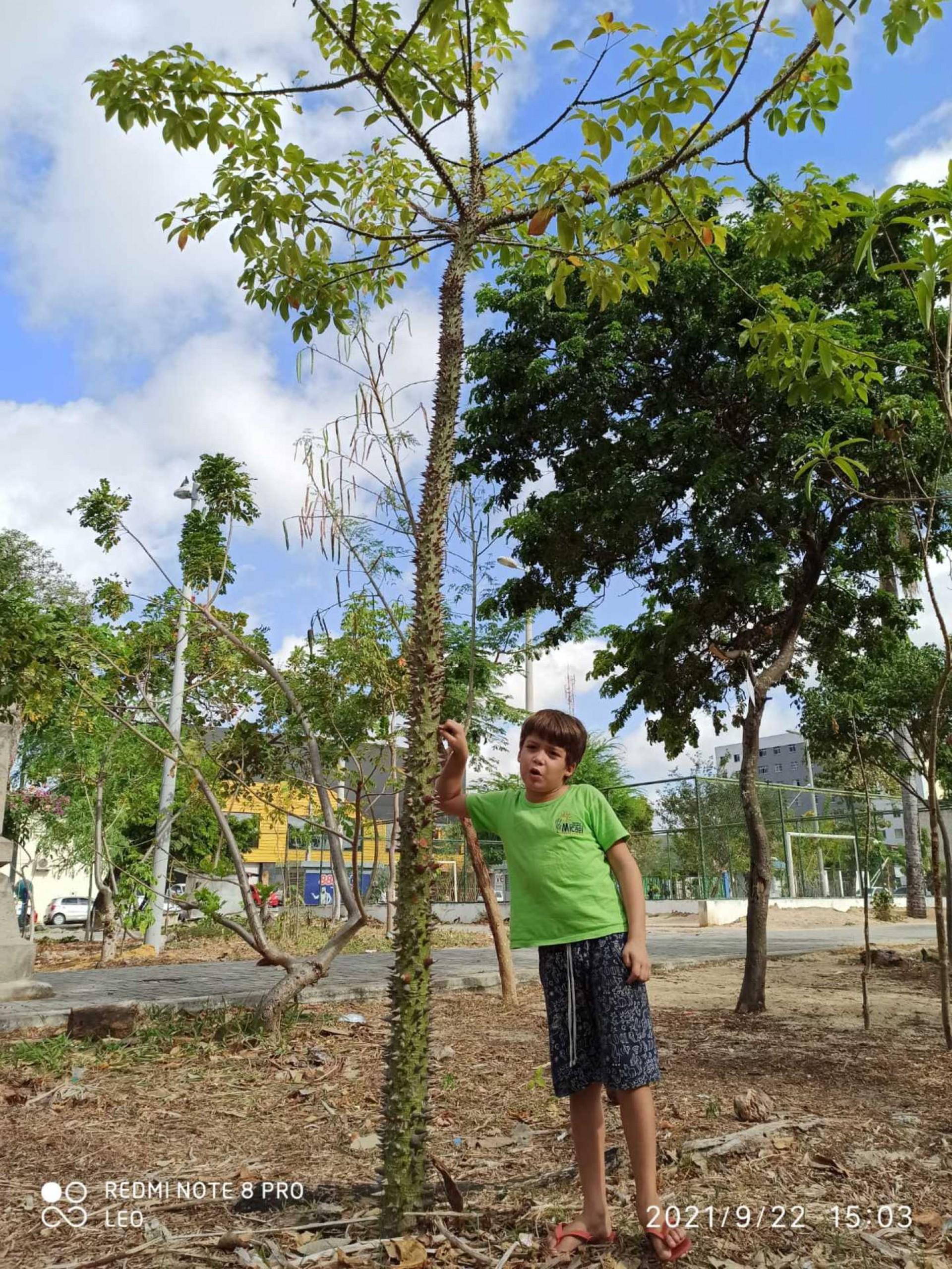 (Foto: Leonardo Jales / Arquivo Pessoal)Tomé, de 7 anos, e a barriguda do sertão da praça José Bonifácio.