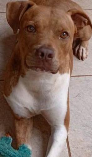 No Brasil, Jack foi o primeiro cão autor de uma ação. Representado pela ONG Sou Amigo, acusou o dono de maus tratos.