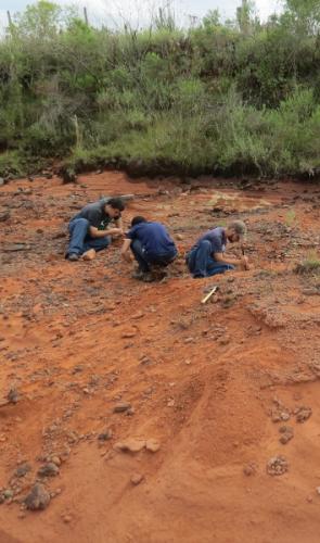 Para a formação de rochas do Triássico inferior, é um absurdo de raro ter 3 espécies