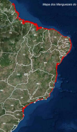 Os manguezais ocupam cerca de 25 mil km² do Brasil; equivalente a + de 12% da floresta de mangue mundial.